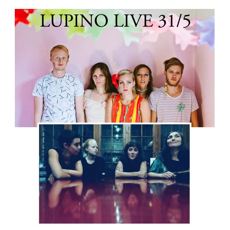 Lupino live 31 5